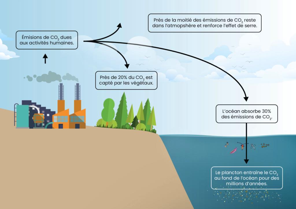 Comment est absorbé le CO2