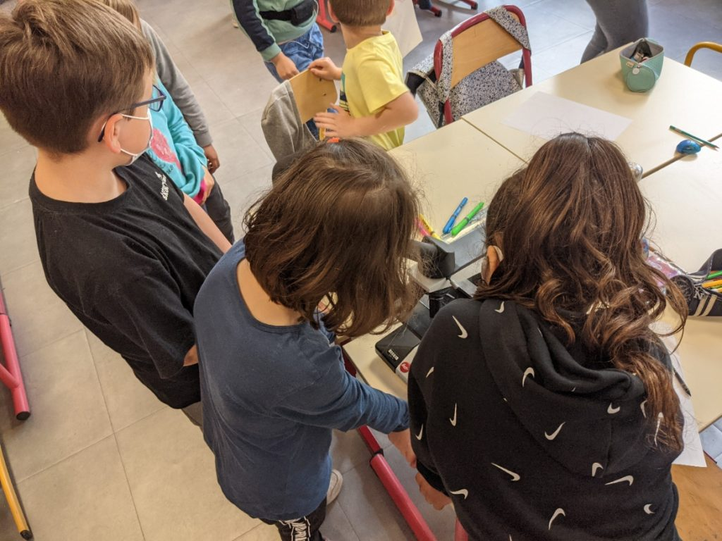 Les élèves observent le plancton au microscope